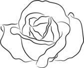 Rose contour — Stock Vector