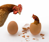 Chicken or Egg on White, Philosophy Question, Who Was the First. Philosophical Dilemma — Stock Photo