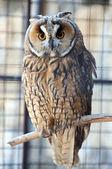 Owl in the zoo — Stock Photo