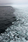 Arctic sea ice — Stock Photo