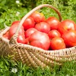 Basket with ripe tomatoes — Stock Photo #2009126