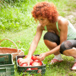 Stock Photo: Young lady sorting tomatoes