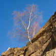 Foto Stock: Tree grown in stone