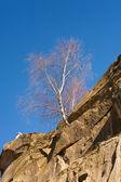 木の石で成長する — ストック写真