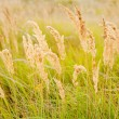 Yellow grass - Stock Photo