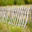 Fence near the forest — Stock Photo