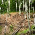 Fallen trees — Stock Photo #2011181