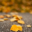 Fallen leaves — Stock Photo #2011461