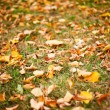 Fallen leaves — Stock Photo #2011497