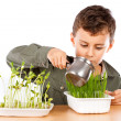 Stock Photo: Schoolboy at a practical biology lesson