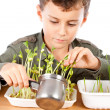 Schoolboy at a practical biology lesson - Foto Stock