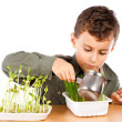 Schoolboy at a practical biology lesson — Stock Photo #2012029