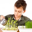 Schoolboy at a practical biology lesson — Stock Photo #2012066