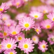 Flowers in a garden - Stock Photo