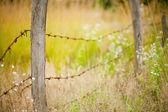 Barb tel çit — Stok fotoğraf