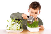 Schoolboy at a practical biology lesson — Stockfoto