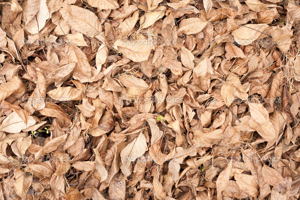 A pile of brown autumn leaves — Stock Photo #2012336