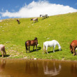 Horses near a pond in mountains - Foto de Stock