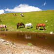 Horses near a pond in mountains - Stock Photo