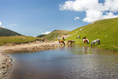 Horses near a pond in mountains — Stock Photo