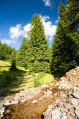 Creek in a pine forest — Stock Photo