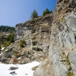 Cliff with pines — Stockfoto