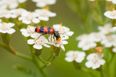 Insect pollenizing flowers — Stock Photo