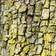 Tree bark — Stock Photo #2243827