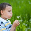 Boy blowing dandelion — Stock Photo