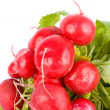 Radishes - Stock Photo