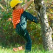 Boy climbing in a tree — Stock Photo #2250054
