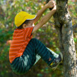 Boy climbing in a tree — Stock Photo