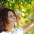 Picking apples — Stock Photo