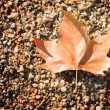 Stock Photo: Fallen leaf