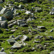 Stock Photo: Rocks in grass