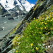Stock Photo: Grossglockner glacier