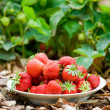 Strawberries on a plate in nature — Stock Photo