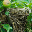 Stock Photo: Blackbird nest