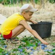 Young boy picking plums — Stock Photo
