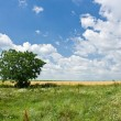Single tree — Stock Photo #2254936