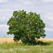 Stock Photo: Single tree