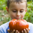 Boy with giant tomato — Stock Photo #2255329