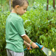 Little gardener at work — Stock Photo #2255400
