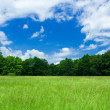 Beautiful landscape with forest — Stock Photo #2255581
