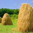 Hay — Stock Photo #2255751
