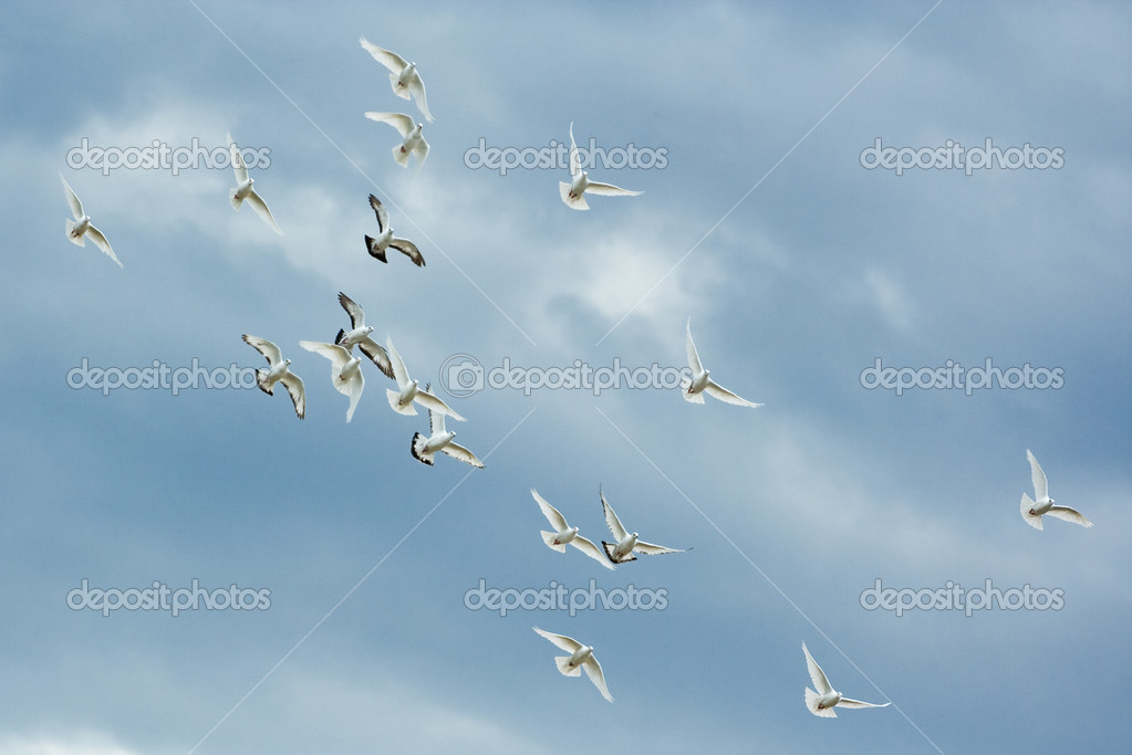 A group of doves flying on the the cl  Stock Photo #2254358