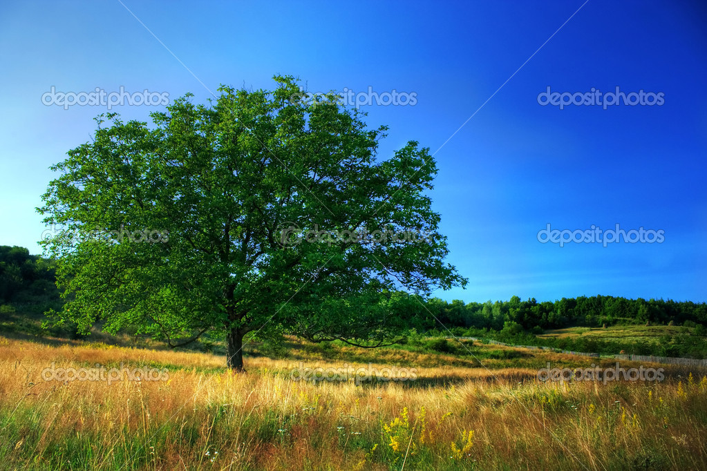 High dynamic range image of a single tree un a meadow under clear blue sky  Stock Photo #2255763