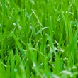 Grass — Stock Photo #2279379