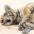 Portrait of a tiger — Stock Photo #2236314