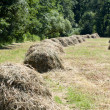 Field with haybails — Stock Photo